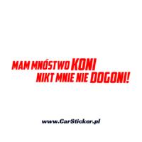 mnostwo-koni (1)